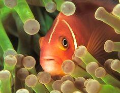marine biologist wannabe..