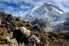 Скільки коштує поїхати на трекінг в Непал. Вартість трекінгу до Базового Табору Евересту та трекінгу навколо Аннапурни. Вартість перельоту, візи та пермітів