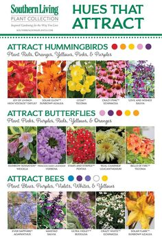 BIRDS, BEES AND BUTTERFLIES, OH MY! Attracting Pollinators to the Garden. These are some of the plants that help you to have a successful Fruit and Veggie Garden and make these little creatures happy too, hey? Hummingbird Plants, Butterfly Plants, Butterfly Feeder, Diy Butterfly, Plants To Attract Butterflies, Butterfly Bush, Plants To Attract Bees, Plants That Repel Bugs, Monarch Butterfly