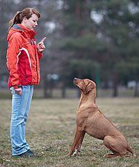 Dog Training Tips – Body Language