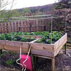 Raised strawberry bed, ready for netting. Room underneath for a shady hideout for the dog. Strawberry Beds, Strawberry Plants, Next Garden, Dream Garden, Raised Garden Beds, Raised Beds, Organic Gardening Tips, Landscaping Plants, Bed Ideas