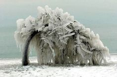 frozen tree  (via place style:NATURE {the poetry of})