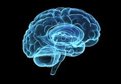 Can the Brain Have Activity After Death?