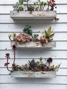 rough wooden planter shelves for succulents Cacti And Succulents, Planting Succulents, Planting Flowers, Succulent Boxes, Pot Plante, Porch Garden, Plants Are Friends, Cactus Y Suculentas, My Secret Garden