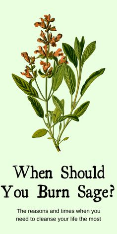 When should you burn sage? The reasons and times when you need to cleanse your life the most. Not all herbal smoke cleansing is smudging, which is specifically about the Native American practice. Smoke cleansing with sage has been seen in many cultures and in modern witchcraft. #sage #smudging #witch #witchcraft #pagan #wicca #occult Benefits Of Burning Sage, Sage Benefits, Health Benefits, Witchcraft Spell Books, Magick Spells, Wicca, Pagan, Sage Cleansing Prayer, Sage Plant