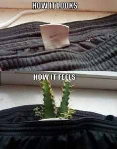 Funny Pictures – 39 Pics hahahahaha, tag itching and scratching feels like cactus