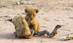 Tswalu Kalahari – Luxury Private Game Reserve