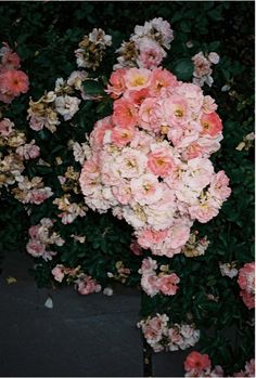 wild roses-years ago I received a bouquet of wild roses.stems wrapped in aluminum! All Flowers, Flowers Nature, My Flower, Beautiful Flowers, Wedding Flowers, White Flowers, Floral Flowers, Bouquet, Planting Flowers