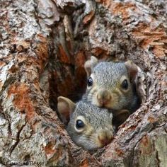 Search For: Squirrel - pixdaus