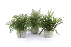 """14"""" H Plastic- Green  Three varieties of fern ready to fill your space with a true sense of sunlight. Full and vibrant greenery to fill your nest with joy for every season."""