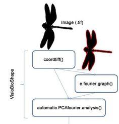 Cómo identificar imágenes biológicas con la física del sonido