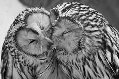 black and white owls photography with objects - Google Search