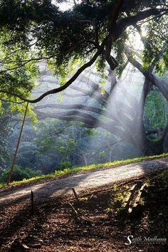 Peradeniya, Kandy - Sri Lanka By Sajith Madhawa Herath / https://www.facebook.com/groups/artgallerysl