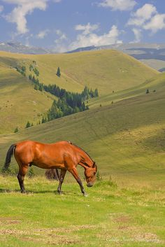 Land Of Wild Horses, Romania Danube Delta, Visit Romania, Medieval Fortress, Carpathian Mountains, Central And Eastern Europe, Southern Europe, Sunflower Fields, Beautiful Places To Visit, Wild Horses