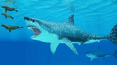 Prey scarcity and competition led to extinction of ancient monster shark #Geology #GeologyPage