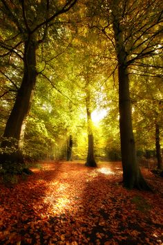 Powerful White Magic Spells in Perth and Kinross Psychic Near Me Autumn Forest, Tree Forest, Autumn Trees, White Magic Love Spells, Types Of Witchcraft, Indian Women Painting, Healing Spells, Supernatural Beings, Thing 1