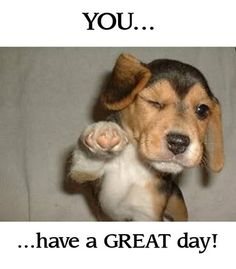 """funny puppy """"You.. have a great day!"""" @cheryl ng Deleeuw in response to your morning pin...:D"""