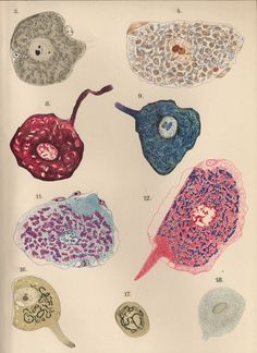 From Cajal's Butterflies of the Soul (2010) by Javier DeFelipe
