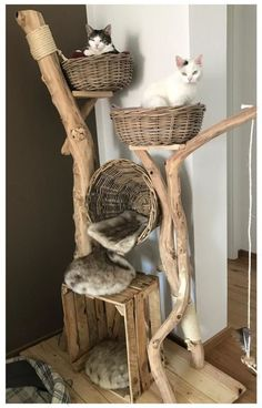 All natural cat tree handmade by Schnurrwerk (Germany) - Katzen - . All natural cat Cool Cat Trees, Cool Cats, Grand Chat, Diy Cat Bed, Cat Beds, Cat Towers, Cat Playground, Natural Playground, Cat Room