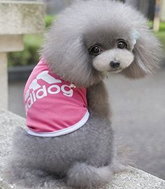Martin_Ld 2016 New Fashion Pet Dog Clothes Autumn Summer Hoodie Coat Jumpsuit Adidog Clothing for Small Dogs Medium Size S M L XL 2XL Hot Sale!! >>> Want additional info? Click on the image.