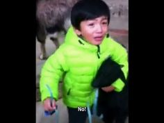 ▶ 3 year old kid fighting to save his animal friend goat...I LOVE this video... Something I have always known...I think it shows we have own base compass for right and wrong before people try to tell us right from wrong...What we should think, or feel or do...He loves that goat and does not want it hurt in any way..He is doing everything he can at that young age to protect this goat!! That!!People need to use that magic gift..it is pure and cannot be rivaled when you are aware it is in…