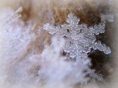 Winter's crystal flowers.