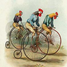 A classic 19th century rooster penny farthing race, what else?