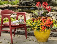 This will brighten up any patio and flower throughout the long dry summer heat. Lantanas are the perfect companion plant in containers. Balcony Railing Planters, Canna Lily, Perfect Plants, Small Space Gardening, Container Flowers, Companion Planting, Summer Garden, Growing Vegetables, Porch Decorating