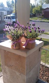 Cute way to use lavender plants as centerpieces. Lavender Plants, Lavender Green, Diy Wedding, Wedding Flowers, Wedding Ideas, Dilly Dilly, Lavender Bouquet, Bridal Shower, Baby Shower