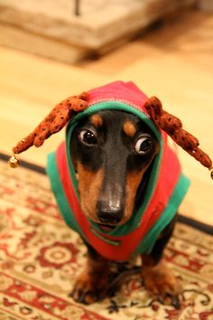 Dachshund Christmas - this is just so many shades of wrong :)