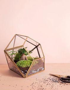 Terrarium en forme de diamant. - Diamond shaped terrarium.