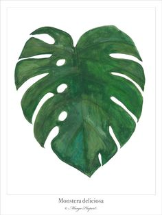 Monstera margohupert.pl