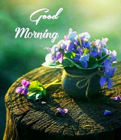 Good Morning Images, Good Morning Images For Whatsapp, Beautiful Good Morning Pictures, Good Morning HD Photos, And Quotes Good Morning Flowers Quotes, Good Morning Monday Images, Good Morning Coffee Gif, Good Morning Beautiful Pictures, Good Morning Nature, Beautiful Morning Messages, Good Morning Happy Sunday, Good Morning Roses, Good Morning Cards