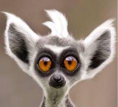 fotos de animales graciosos - Pesquisa Google