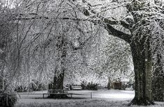 https://flic.kr/p/4DD5JK | Garden Quad Trees with Benches | Balliol's Garden Quad early on a Snowy April morning