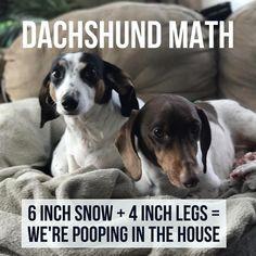 THE STRUGGLE is real. #dachshund #dachshundcentral #longdog