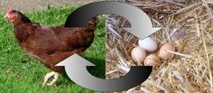 https://ortheegg.wordpress.com/2015/07/25/chicken-or-the-egg-the-answer/