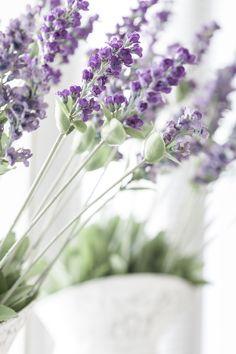 Lavender Dreams - Raindrops and Roses