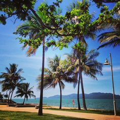 Gorgeous tropical feel at The Strand, Townsville #townsvilleshines #palmtrees #instagram photo by dlhey