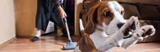 Based on 7,882 analyzed reviews Table of contents Our analysis The vacuums Pet hair pickup vacuum buying guide NerdWallet Shopping's scoring of the best vacuums for pet owners are based…