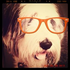 This is bearded collie Sydney, who keeps Claire O'Meara full of bounce - http://www.workfromhomewisdom.com/2015/02/12/pet-fursday-sydney/
