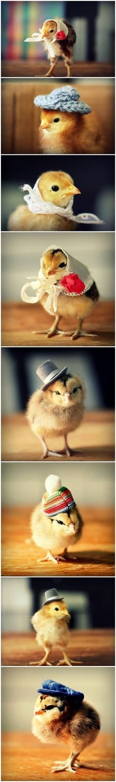 Chicks in hats!