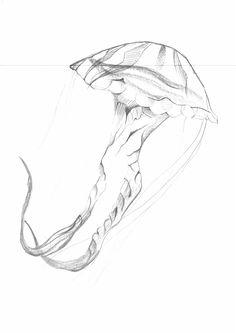 Sketch_Jellyfish_13