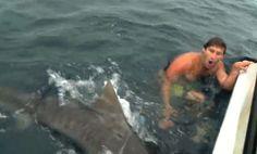 Amazing Video Captures Shark Attack Near Miss