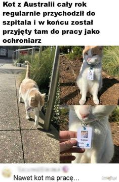 Really Funny Memes, Wtf Funny, Polish Memes, Russian Memes, Marvel Drawings, Laugh A Lot, Funny Photos, Haha, Cute Animals