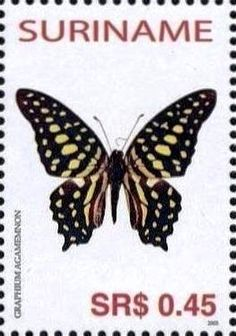 Stamp Tailed Jay Graphium Agamemnon Suriname Butterflies MiSR 1972SnSR 1323h