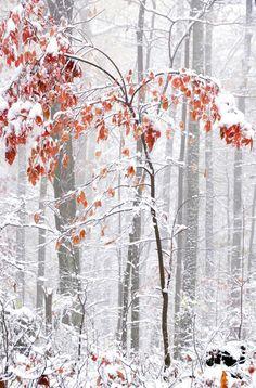 'Autumn Snow' by Thomas R. Fletcher
