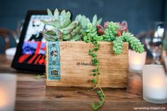 succulents in wood boxes