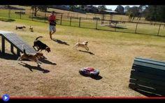 Automobili di razza e branchi radiocomandati #cani #animali #mucche #radiocomandi