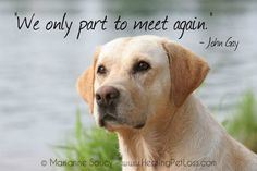 Saying goodbye to your pet http://healingpetloss.com/pet-loss-saying-goodbye-to-your-pet/ #petloss